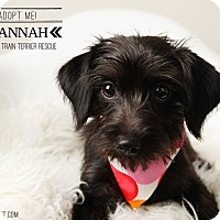 Adopt A Pet :: Hannah-pending adoption - Omaha, NE