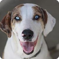 Adopt A Pet :: PAIGE - Kyle, TX