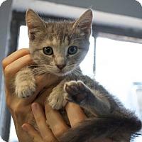 Adopt A Pet :: Eliza - Sparta, NJ