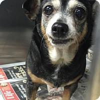 Adopt A Pet :: Angela - Miami, FL