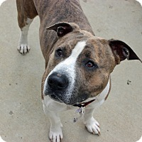 Adopt A Pet :: Will Wheaton - Troy, MI