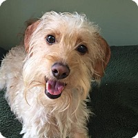 Adopt A Pet :: Duffy - Costa Mesa, CA