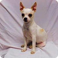 Adopt A Pet :: Angel-092307j - Tupelo, MS