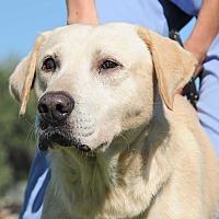 Adopt A Pet :: Solo - Agoura Hills, CA