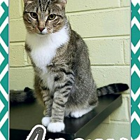 Adopt A Pet :: Angus - Edwards AFB, CA