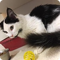 Adopt A Pet :: Mr. Oreo - The Dalles, OR