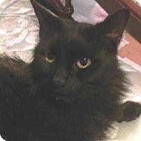 Adopt A Pet :: Mamma Mia - Putnam, CT