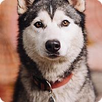 Adopt A Pet :: Kenai - Portland, OR