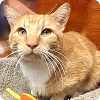 Adopt A Pet :: Cyrus - Long Beach, NY