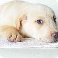 Adopt A Pet :: MARTY - Ukiah, CA