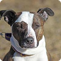 Adopt A Pet :: April - Midland, MI