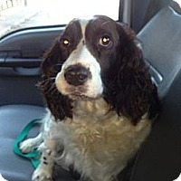 Adopt A Pet :: Lei-Lei - Vidor, TX