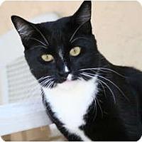 Adopt A Pet :: Tiki - Bonita Springs, FL