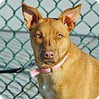 Adopt A Pet :: Aleah - Cheyenne, WY