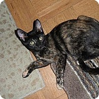 Adopt A Pet :: Roxie - Norwich, NY
