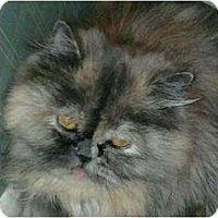 Adopt A Pet :: Diva - Columbus, OH