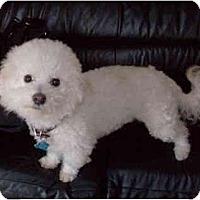 Adopt A Pet :: Shasta - La Costa, CA