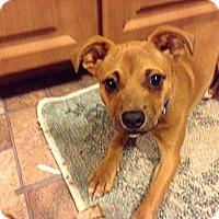 Adopt A Pet :: Gunner - Trenton, NJ