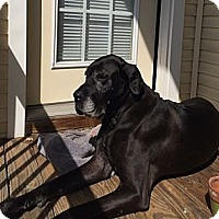 Adopt A Pet :: Onyx - Manassas, VA