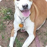 Adopt A Pet :: Kimmy - Allentown, PA