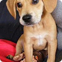 Adopt A Pet :: Juice - North Olmsted, OH