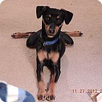 Adopt A Pet :: Spike - Nashville, TN