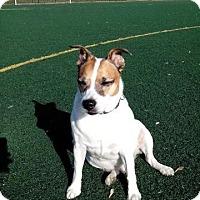 Adopt A Pet :: Jack - Acushnet, MA