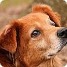 Adopt A Pet :: Rust