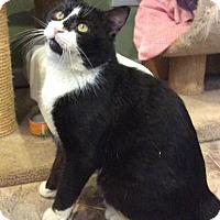 Adopt A Pet :: Roscoe - Breinigsville, PA