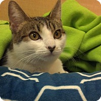 Adopt A Pet :: Darcy - Scottsdale, AZ