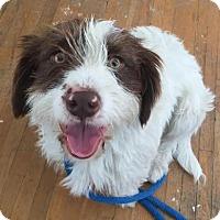 Adopt A Pet :: Alphie - Los Angeles, CA
