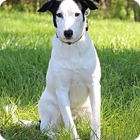 Adopt A Pet :: Buddy - Waldorf, MD