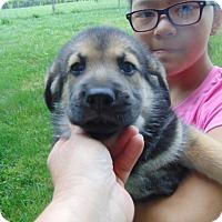 Adopt A Pet :: Nathan - Greeneville, TN