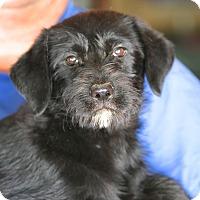 Adopt A Pet :: Will Ferrell - Glastonbury, CT
