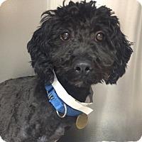 Adopt A Pet :: Alf - Oak Ridge, NJ