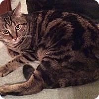 Adopt A Pet :: Clyde - Smithfield, NC