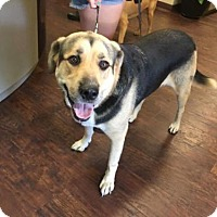 German Shepherd Dog Mix Dog for adoption in Greenville, Texas - Cage 7 Tigger