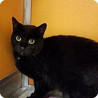 Adopt A Pet :: Tessa - Elyria, OH