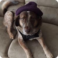 Adopt A Pet :: Hope - whiting, NJ