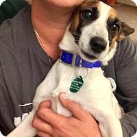Adopt A Pet :: Bingo - Elyria, OH