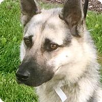 Adopt A Pet :: Teagen - Oswego, IL
