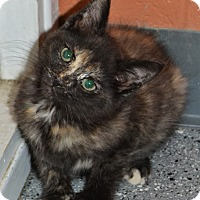 Adopt A Pet :: Candy - Michigan City, IN