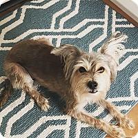 Adopt A Pet :: Rocky - Rancho Santa Fe, CA