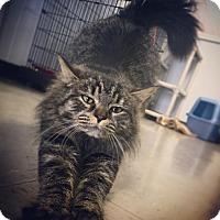 Adopt A Pet :: Willow - Sanford, NC