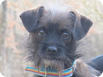 Terrier (Unknown Type, Small)/Yorkie, Yorkshire Terrier Mix Dog for adoption in Spring Valley, New York - Chelsey