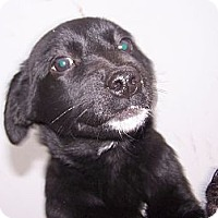 Adopt A Pet :: Beauty - Chewelah, WA