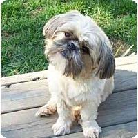 Adopt A Pet :: Buddy - Dayton, OH