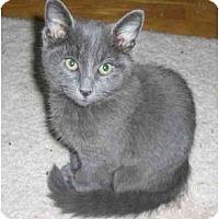 Adopt A Pet :: J.J. - Richmond, VA