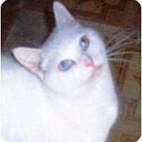 Adopt A Pet :: Piglet - Summerville, SC