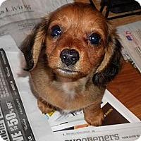 Adopt A Pet :: Tumbles - San Jose, CA